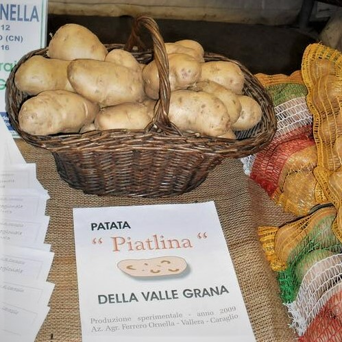 patata-piatlina